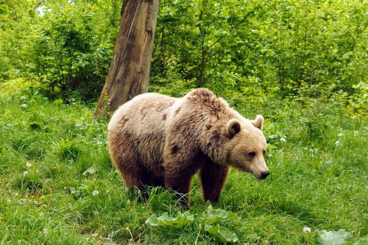 Zarnesti Libearty - bear sanctuary